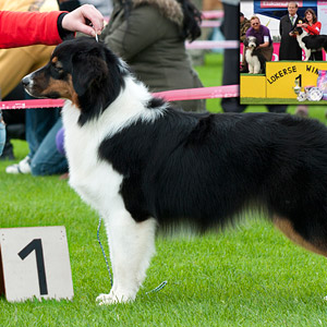 Noa 8 months old and BEST PUPPY in SHOW at the dogshow in Lokeren.